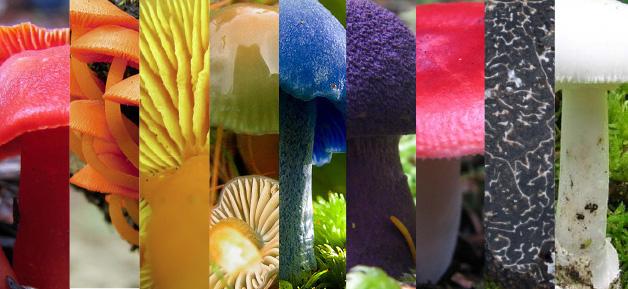 setasdecolores_seelecomunicacion